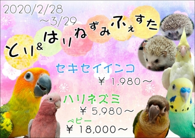 ニュース 総合 インコ 可愛がり 【鳥ニュース】Twitterインコ虐待で名古屋市の坂野嘉彦が逮捕!虐待事件の経緯まとめ