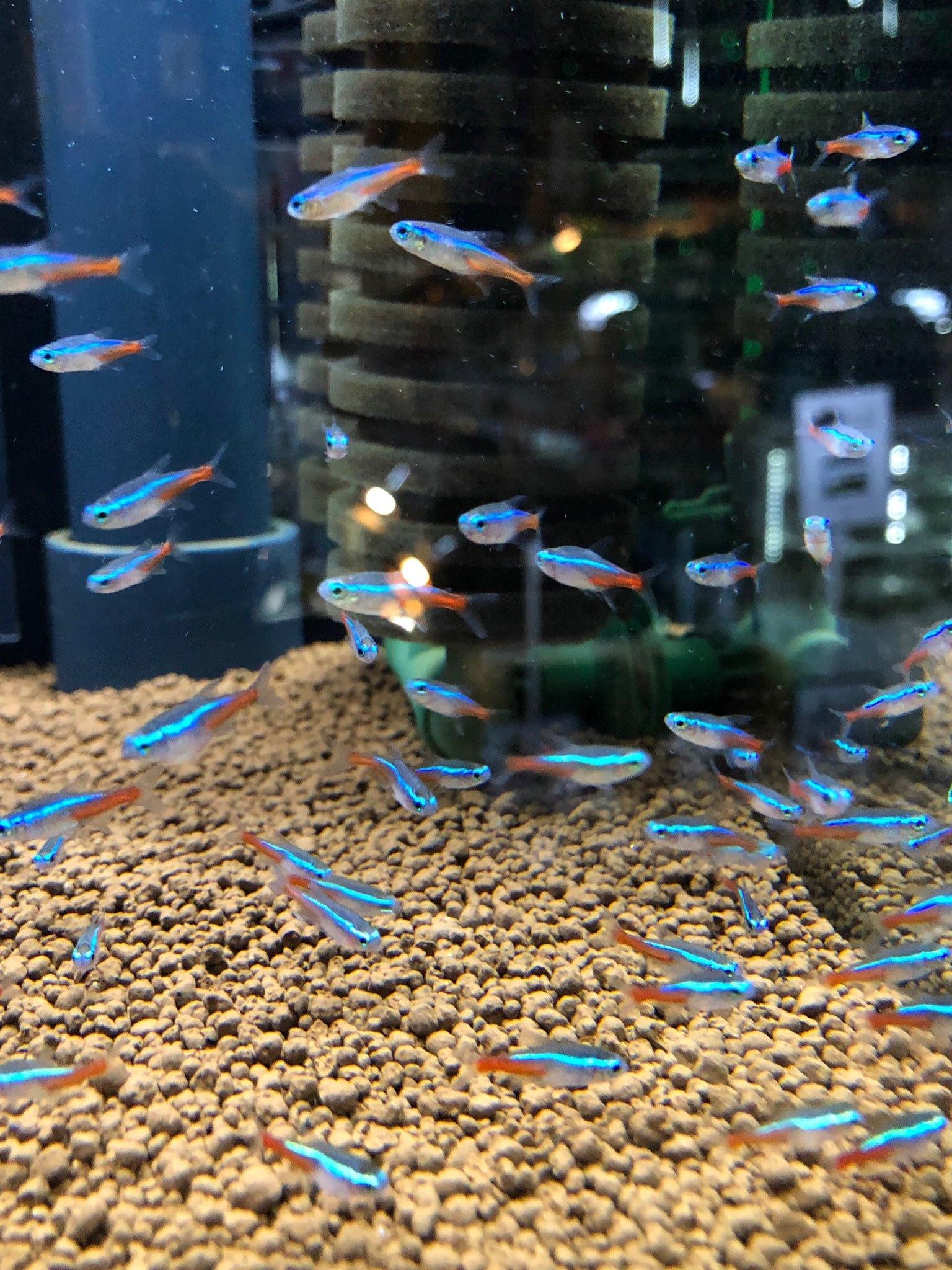 和歌山 熱帯魚