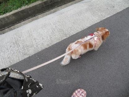 すたこらと歩きます
