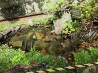 こんな池もきれいな水
