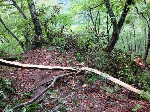 生木を引き裂いた