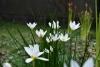 令和元年9月御庭の花