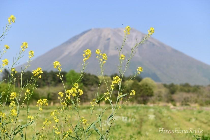 大山 お花畑