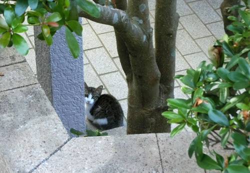 14日、ネコ発見!