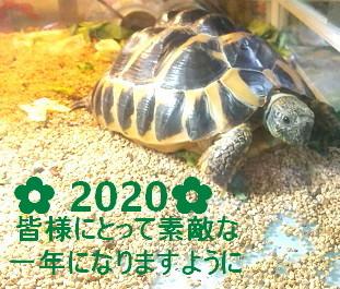DSC_0020_2020.jpg