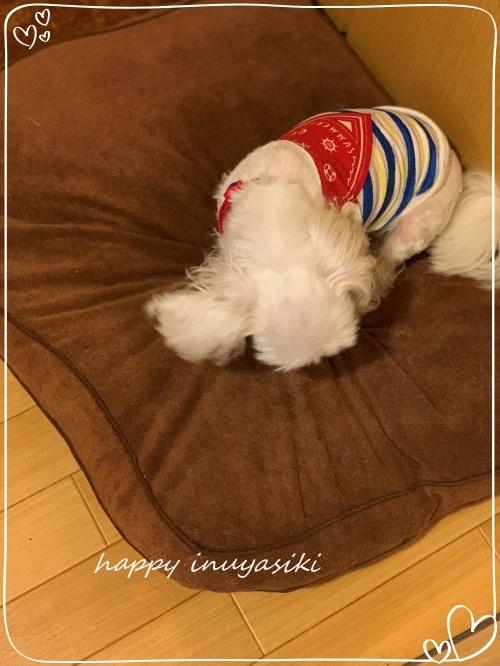 mini2019IMG_7539 (編集済み)