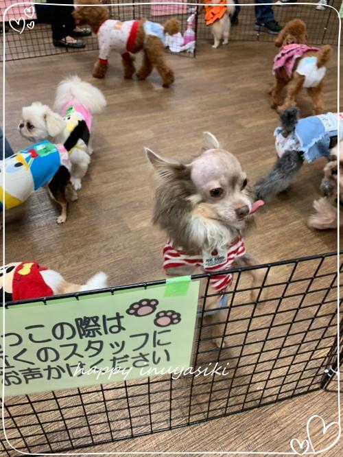 mini20192019 10 27小豆沢ふれあい会_191027_0546