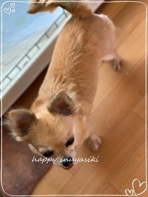 mini2019IMG_0537 (編集済み)