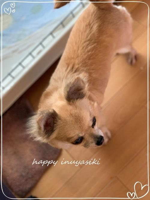 mini2019IMG_0538 (編集済み)