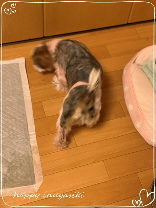 mini2019-1IMG_4605 (編集済み)