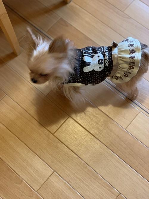 mini2019-1IMG_5971 (編集済み)