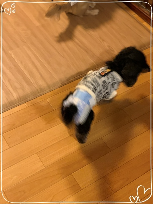 mini2019-1IMG_7514 (編集済み)
