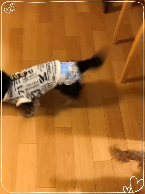 mini2019-1IMG_7515 (編集済み)
