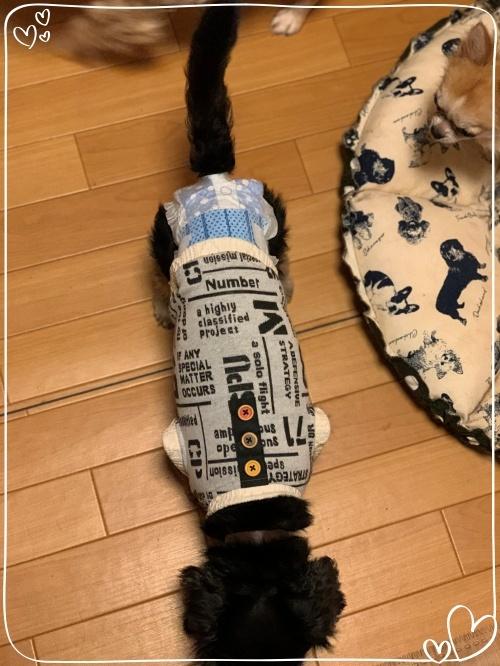 mini2019-1IMG_7518 (編集済み)