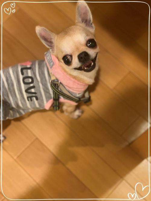 mini2019-1IMG_7796 (編集済み)