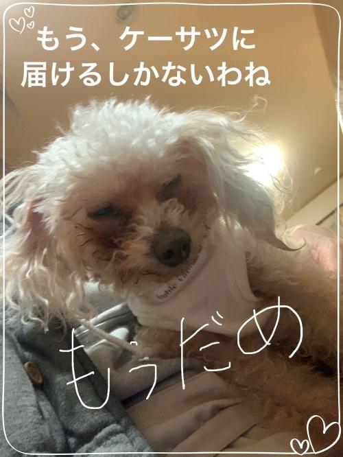 mini2019-1IMG_7751.jpg
