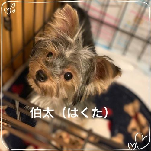 mini2019IMG_0093.jpg