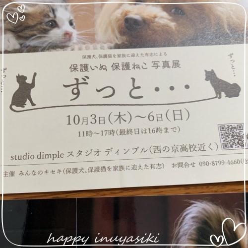mini2019IMG_7163(1).jpg