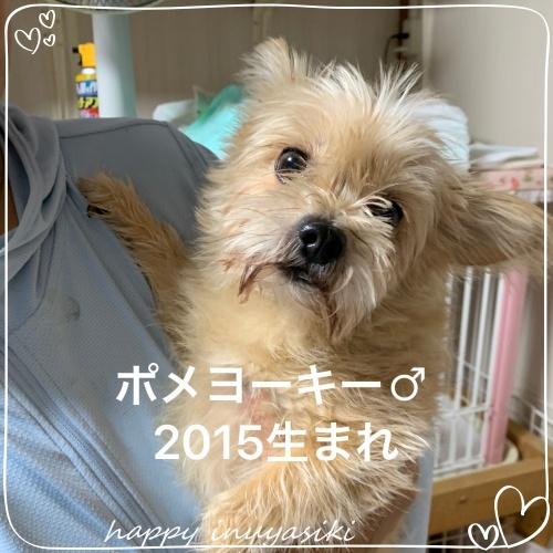 mini2019IMG_9388(1).jpg