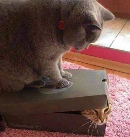 cat knock