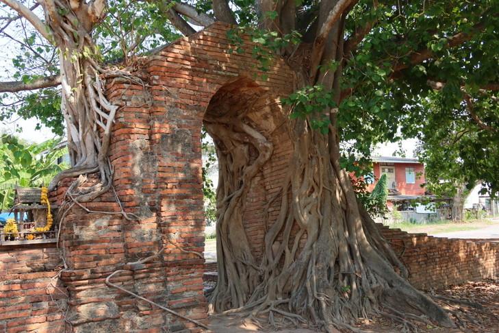 Wat Phra Ngarm (3)