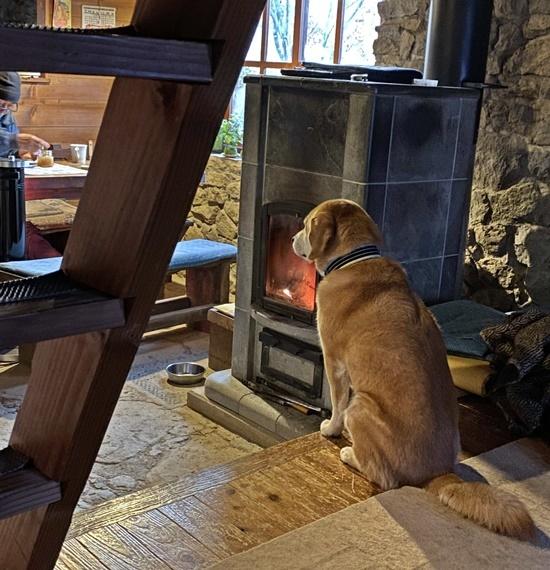 愛犬とストーブ・パン待ちの図