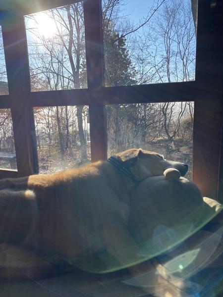 陽だまりの犬