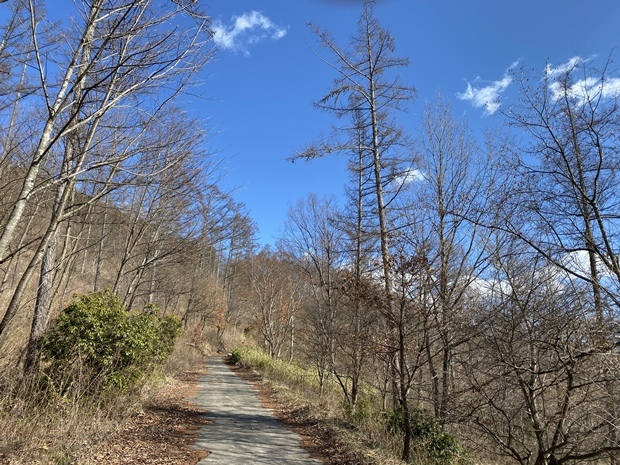 自然の森に囲まれた山道