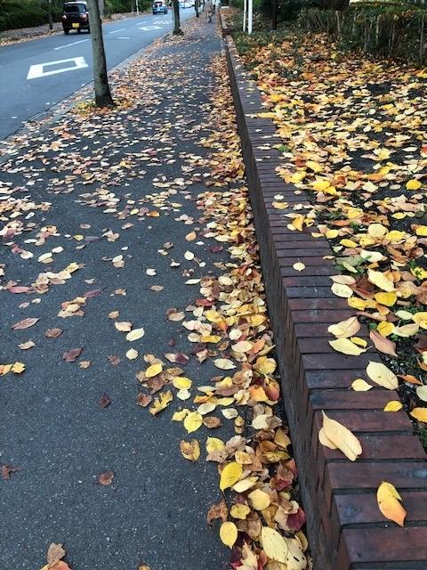 紅葉散歩3