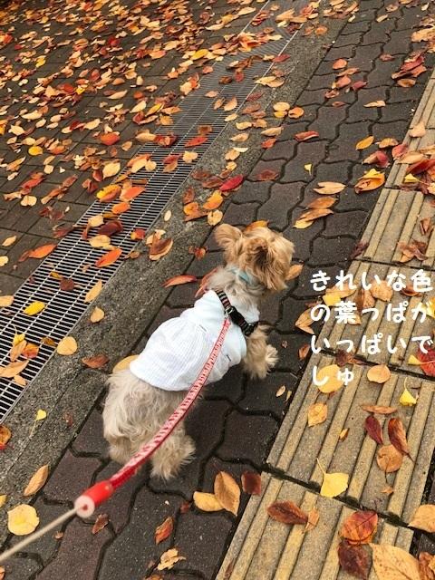 紅葉散歩1 (2)