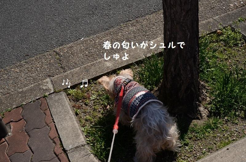 DSC_9511.jpg