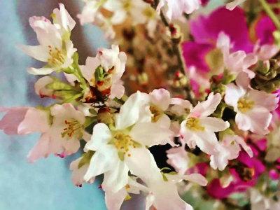 2020東海桜