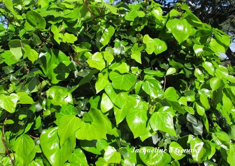 verde4_200324