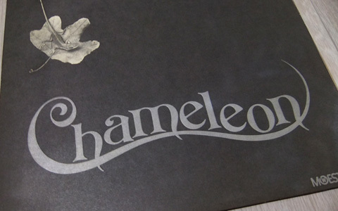 chamelon (13)