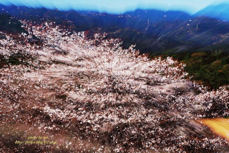 山桜-1-2-1(blog)