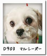 d903-0.jpg