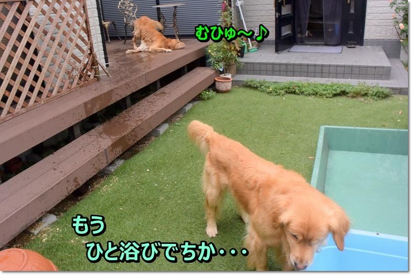 DSC_7105mひゅひゅ~
