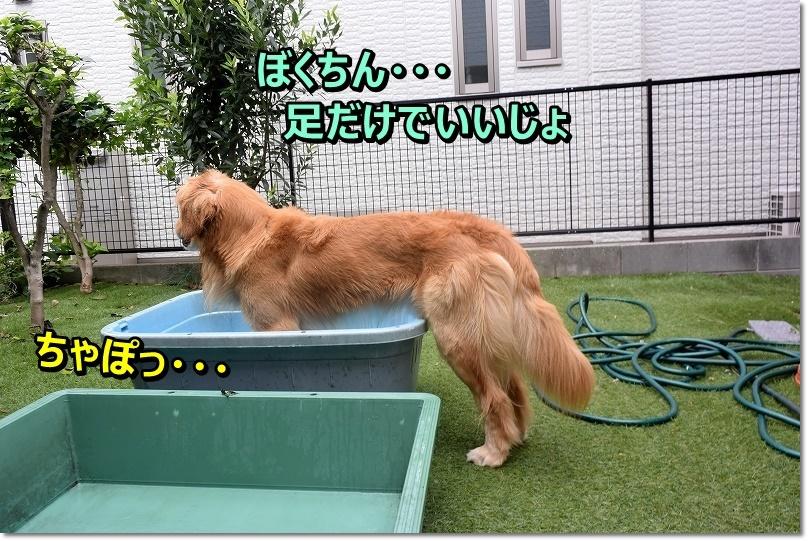 DSC_7111ちゃぽっ