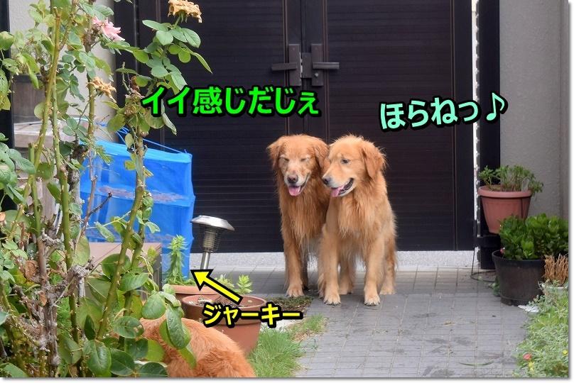 DSC_7129ほらね~