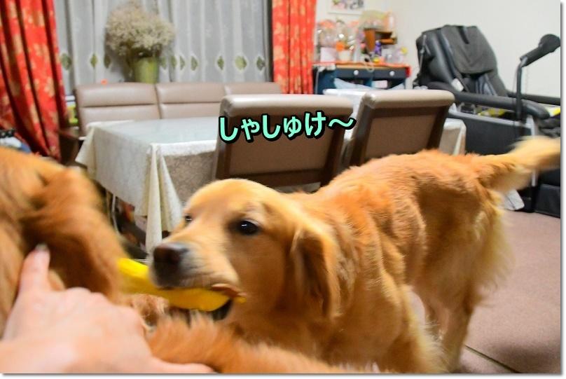 DSC_8960ほれほれ~