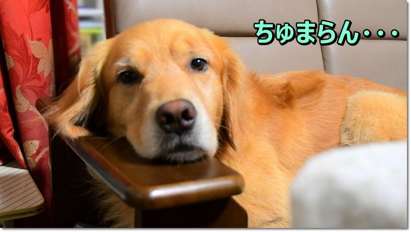 DSC_8971ちゅまらん・・・
