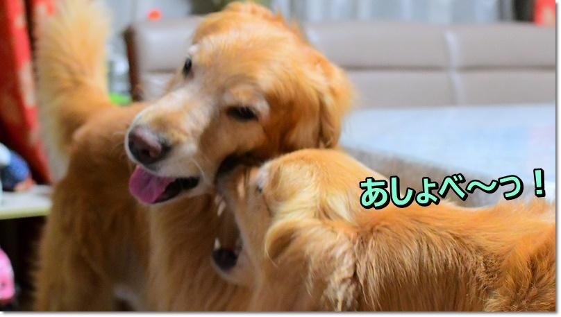 DSC_8981あしょべっ!