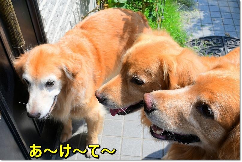 DSC_9196あ~け~て~