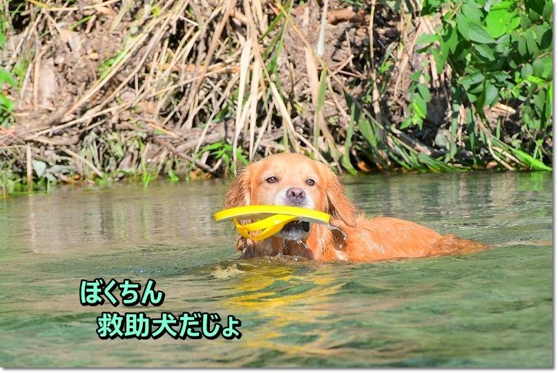 DSC_9254ぼくちん救助犬