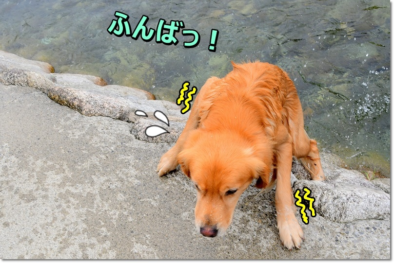 DSC_9546ふんばっ
