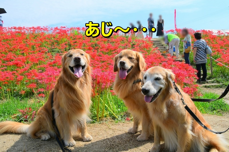 DSC_9681あじ~