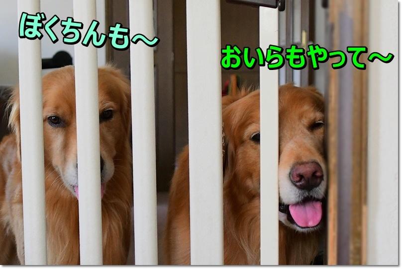 DSC_9460_20190930183915aa6.jpg
