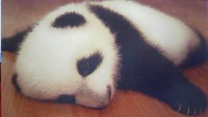 パンダ寝る