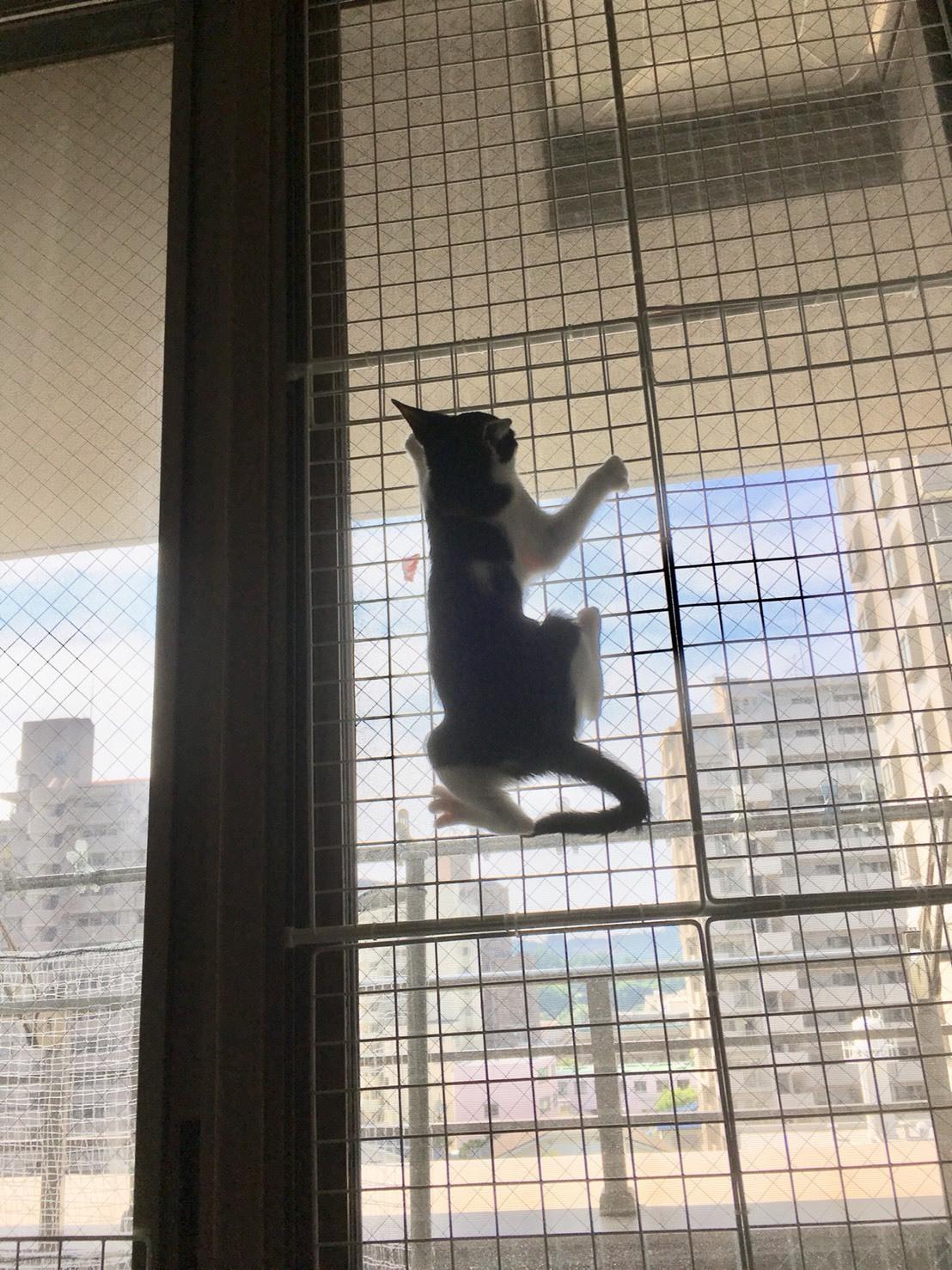 猫はワイヤーネットを登るので窓ギリギリまで対策を
