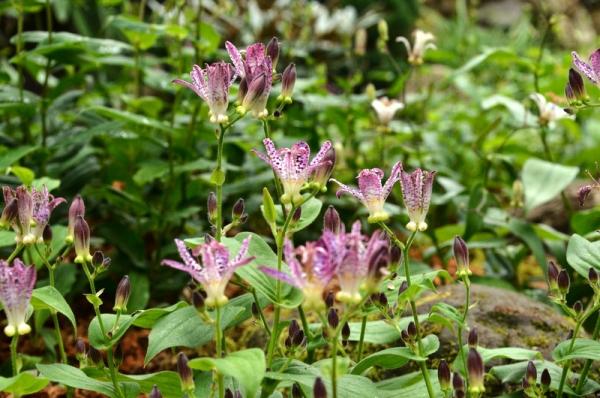 湿生花園 秋36